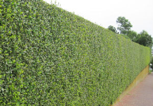 hedge-cutting-maintenance-stockwell